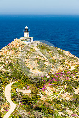 Revellata lighthouse with flowers and maquis in Corsica