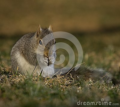 Free Reverent Squirrel Royalty Free Stock Image - 25907976