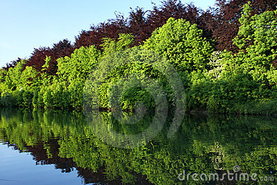 Réflexion de forêt