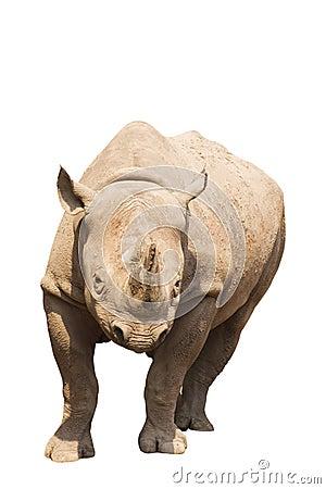 Free Rhino Stock Photo - 1032240