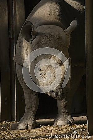 Free Rhino Stock Photo - 7448090