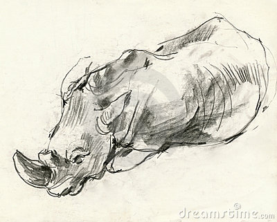 Rhino, drawing 2