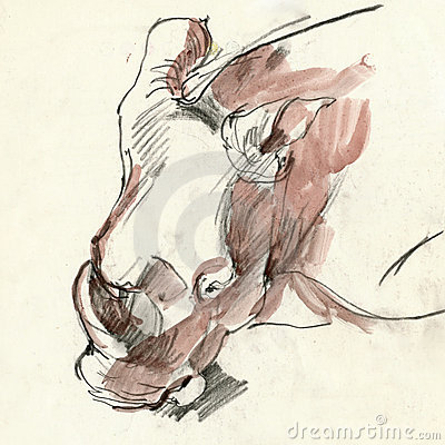 Rhino head, drawing