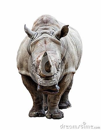 Free Rhino On White Background Stock Image - 32316281