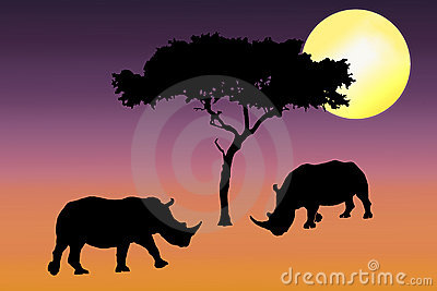 Rhino silhouette in sunset
