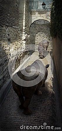 Rhino Street