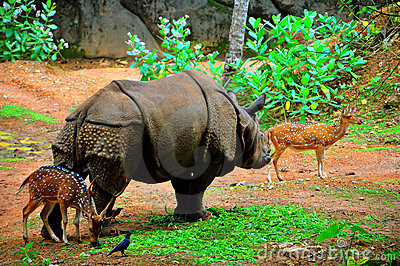 Rhino with two axis deer