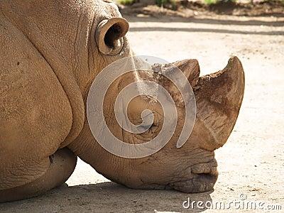 Rhino under the sun