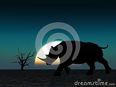 Rhino Wildlife 22