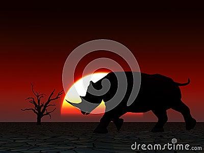 Rhino Wildlife 23
