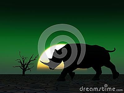 Rhino Wildlife 24
