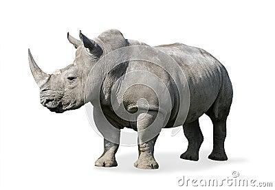 Rhinoceros Royalty Free Stock Image Image 4785986