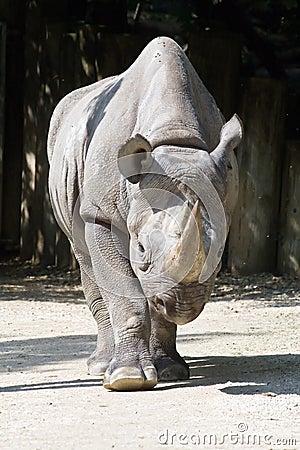 Free Rhinoceros Stock Images - 6162764