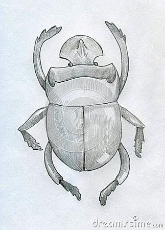 Rhinoceros beetle sketched