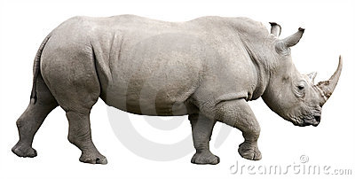 Rhinoceros with clipping path