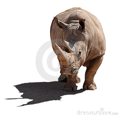 Rhinoceros, isolation, a white background.