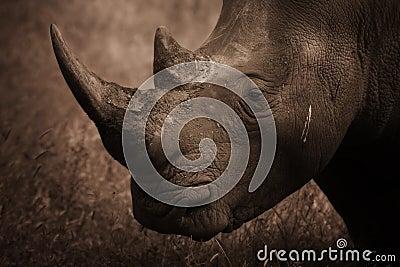 Rhinoceros Profile, Sepia