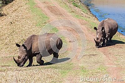Rhinos Wildlife Waters