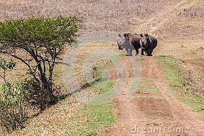 Rhinos Wildlife Bank Crossing
