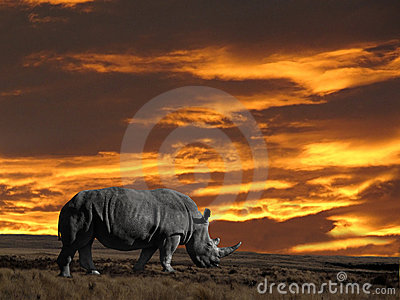 Rhinoseros with sunset sky