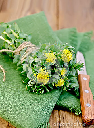 Free Rhodiola Rosea On The Green Napkin Stock Images - 31740474
