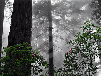 rhododendron in the fog