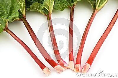 Rhubarb bunch isolated