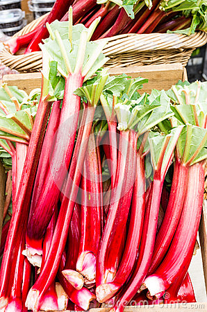 Rhubarb stalks on display at the market