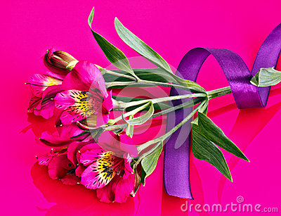 Ribbon on Alstroemeria flower