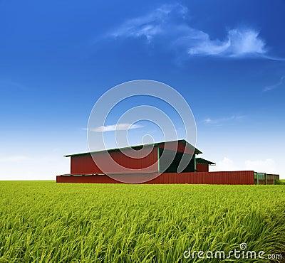 Rice factory.
