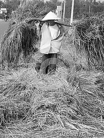 Free Rice Famer Royalty Free Stock Photos - 2458268