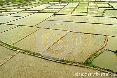 Rice field blocks