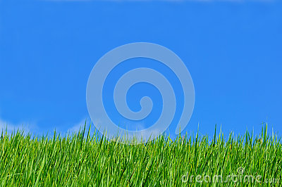 Rice field blue sky