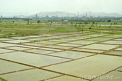 Rice field with factories