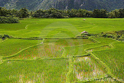 Rice field in Laos, Vang Vieng