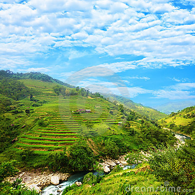 Free Rice Field Terraces Royalty Free Stock Image - 10809136