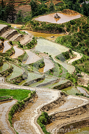 Rice field terraces. Near Sapa, Vietnam