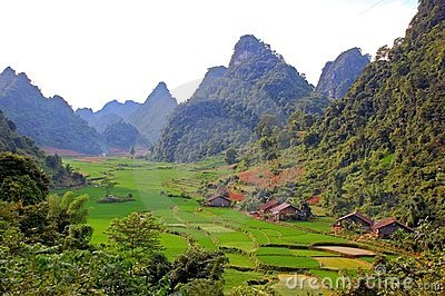 Rice field on the valley in Asia