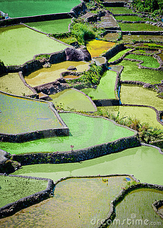 Rice fields in batad,philippines