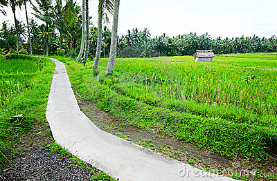 Rice fields walking path, Bali countryside view