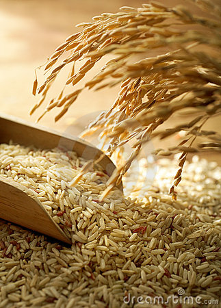 Rice Grain Stock Images - Image: 13883674