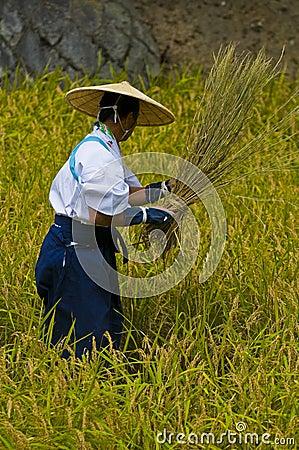 Rice harvest ceremony Editorial Stock Photo