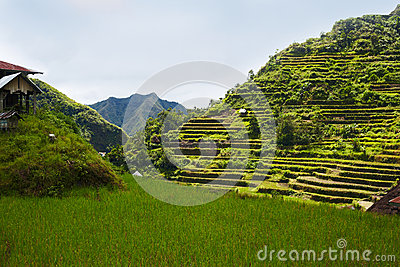 Rice and hill