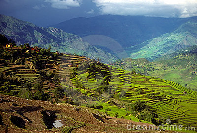 Rice paddies as layers of terraced fields