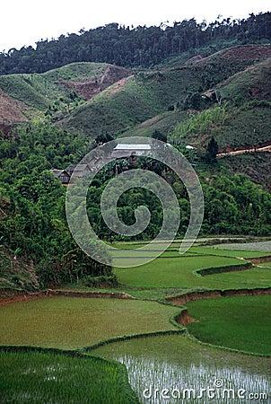 Rice Paddies,Madagascar