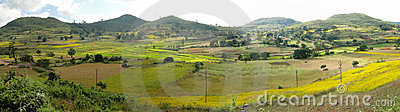 Rice paddies in valley of the Eastern Ghats
