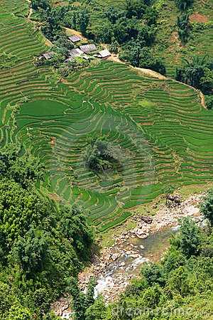 Rice paddy river view