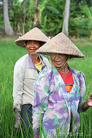 Rice Paddy Workers Editorial Stock Photo