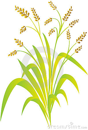 Free Rice Plant Stock Images - 11277904
