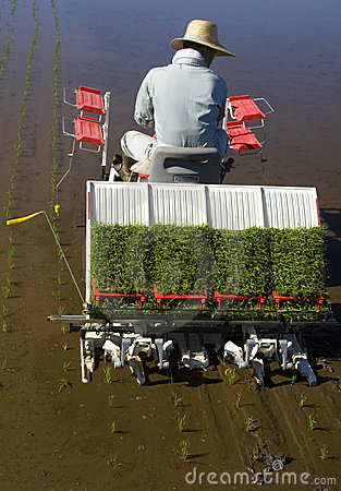 The Rice Planter II